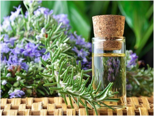 Công dụng tuyệt vời của cây hương thảo