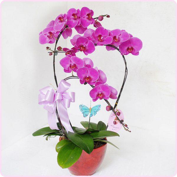 Gợi ý hoa tặng mừng thọ ông bà phù hợp và ý nghĩa nhất