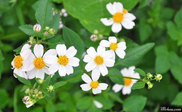 Những loài hoa tượng trưng cho sự kết thúc
